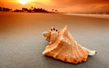 Earth - Shell Wallpapers and Backgrounds ID : 496822