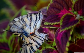 Animal - Butterfly Wallpapers and Backgrounds ID : 499154