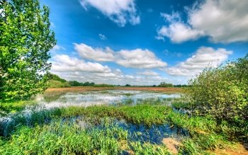 Earth - Swamp Wallpapers and Backgrounds ID : 499409