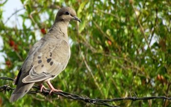 Animalia - Dove Wallpapers and Backgrounds ID : 499474