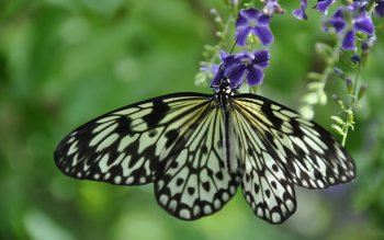 Animal - Butterfly Wallpapers and Backgrounds ID : 500044