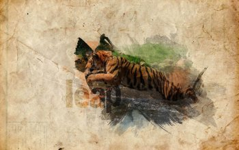 Animalia - Tigre Wallpapers and Backgrounds ID : 500277