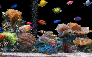 Animal - Fish Wallpapers and Backgrounds ID : 501392
