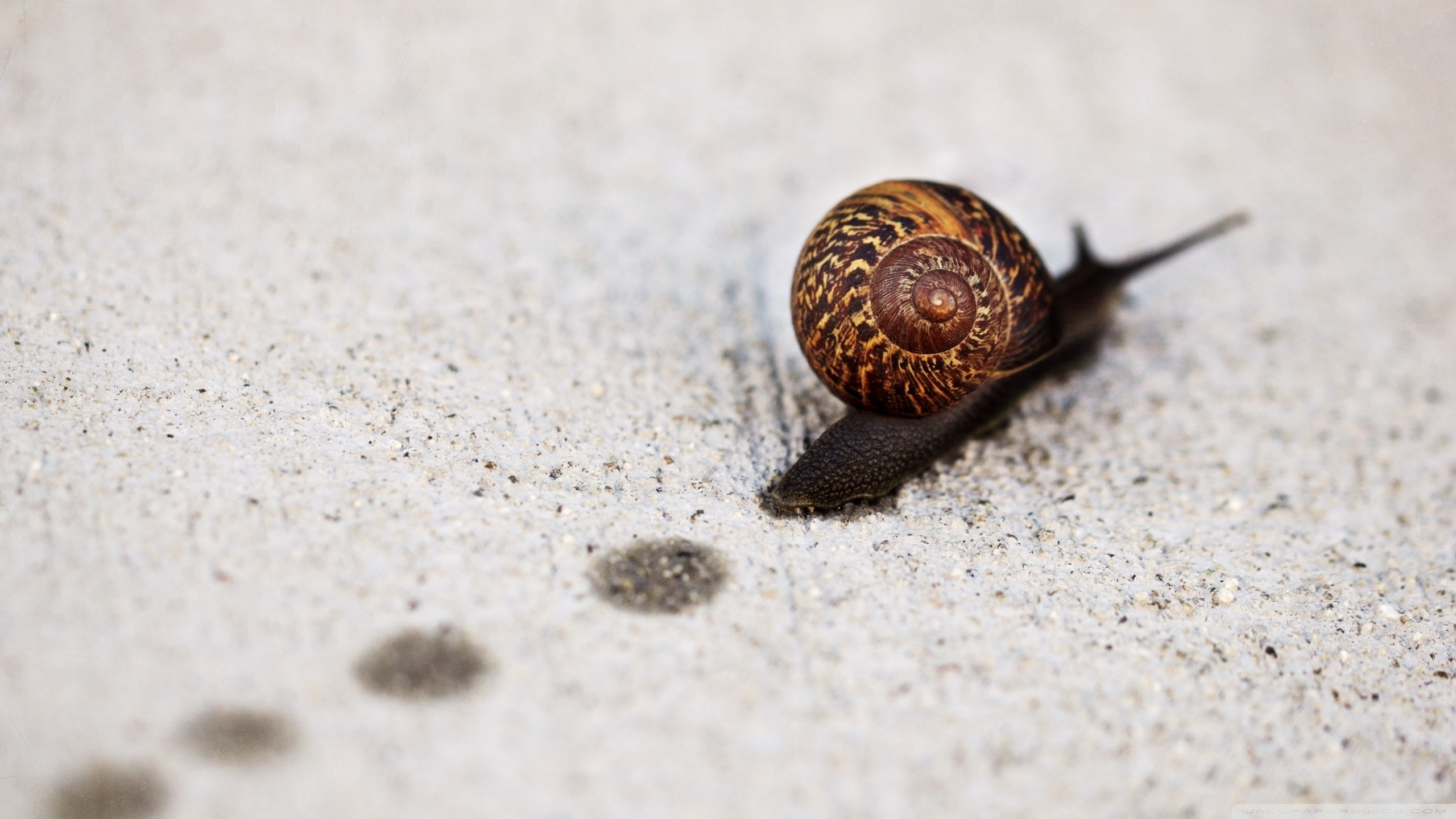 Snail Full HD Wallpaper And Background Image