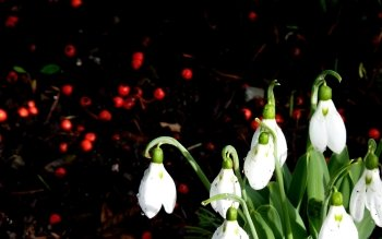 Earth - Snowdrop Wallpapers and Backgrounds ID : 508449