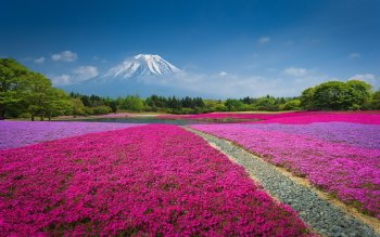 80 Mount Fuji Hd Wallpapers Background Images Wallpaper