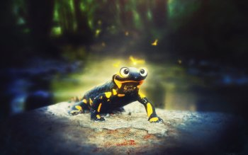 Animal - Salamander Wallpapers and Backgrounds ID : 516649