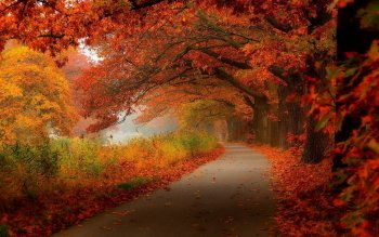 Earth - Autumn Wallpapers and Backgrounds ID : 517496