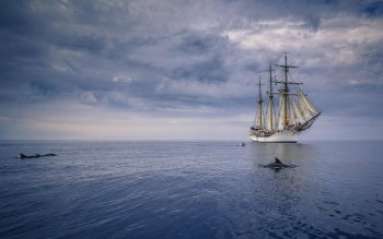 Vehicles - Sailing Ship Wallpapers and Backgrounds ID : 522474
