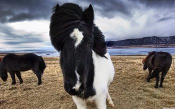 Animal - Horse Wallpapers and Backgrounds ID : 522606