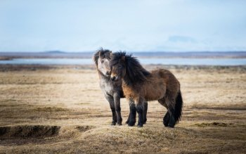 Animal - Horse Wallpapers and Backgrounds ID : 522994
