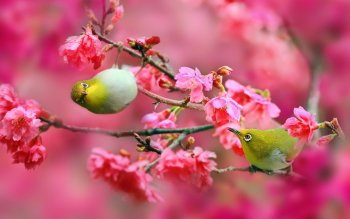 Animal - Bird Wallpapers and Backgrounds ID : 523073