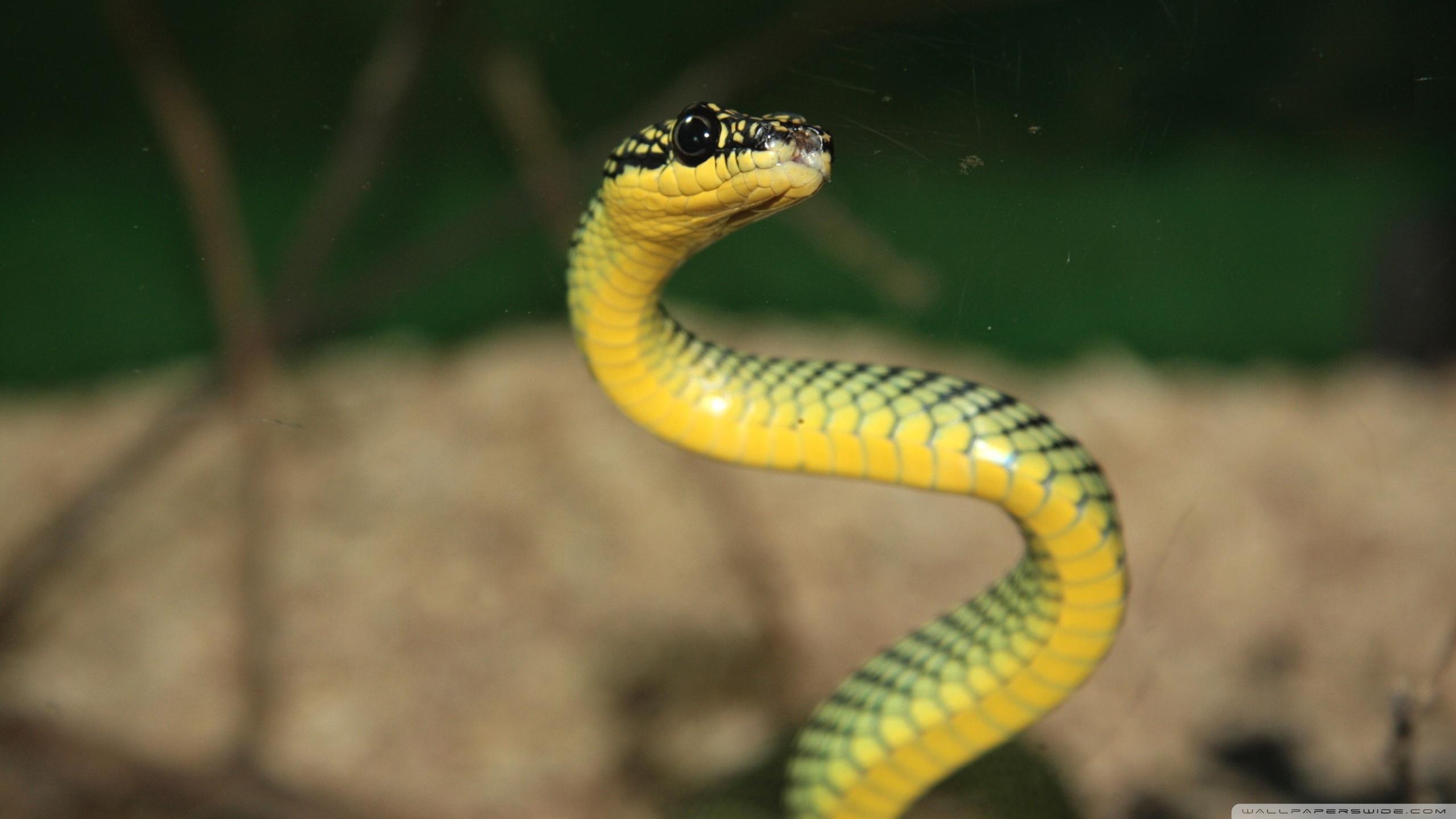 snake hd wallpaper background image 2560x1440 id 525226