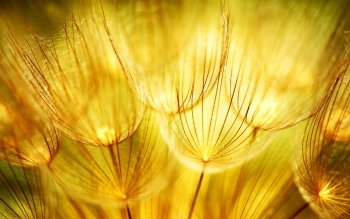 Photography - Macro Wallpapers and Backgrounds ID : 529907