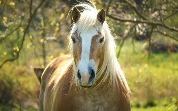 Animal - Horse Wallpapers and Backgrounds ID : 529913