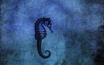 Animal - Seahorse Wallpapers and Backgrounds ID : 53452