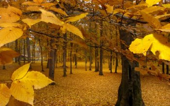 Earth - Autumn Wallpapers and Backgrounds ID : 534690