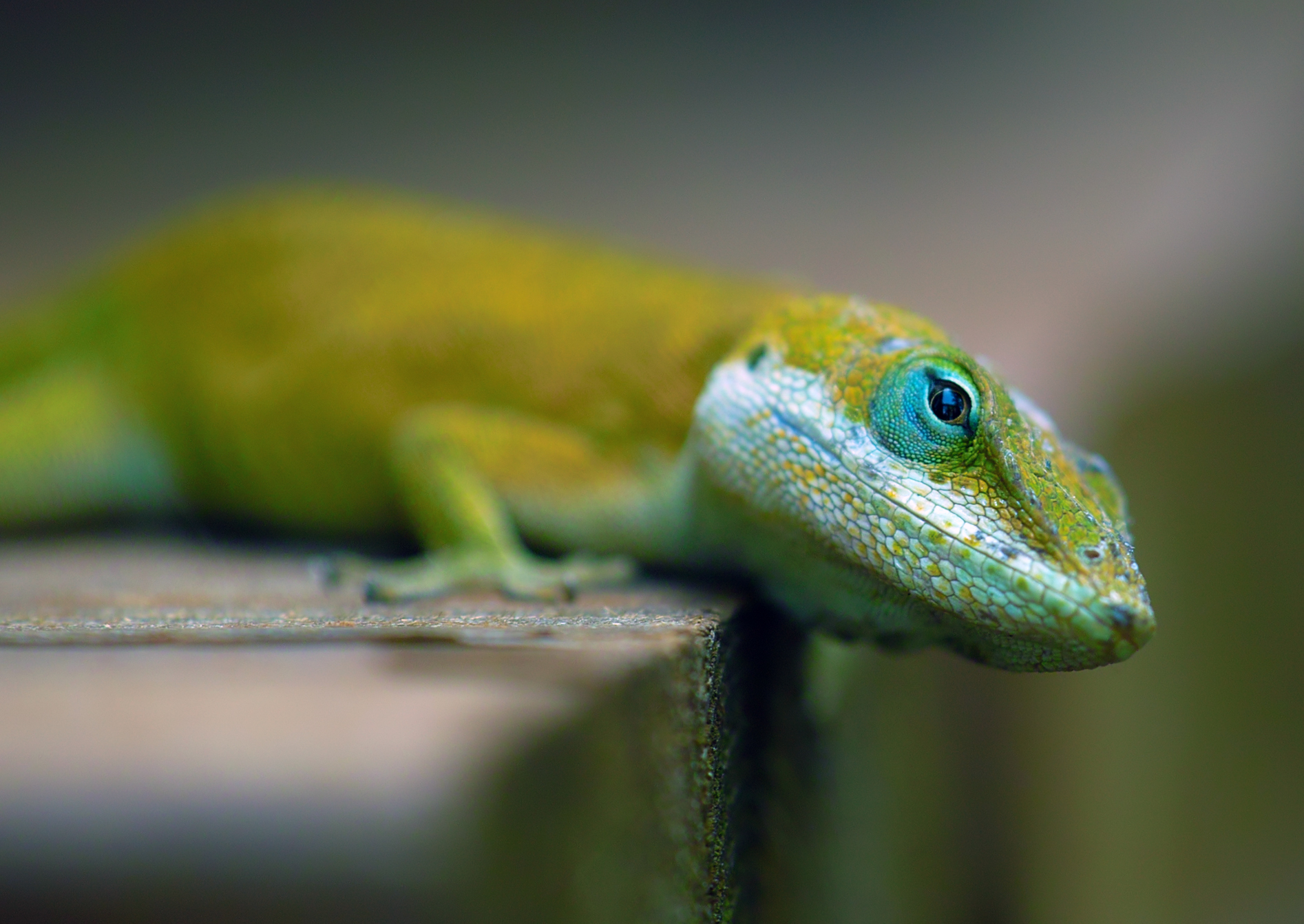 22 reptile hd wallpapers - photo #3