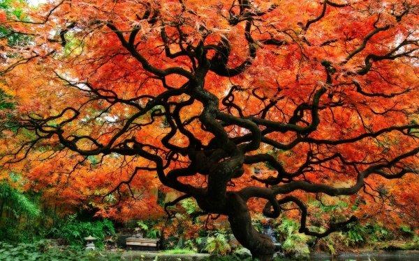 Man Made Japanese Garden Fall Japan Tree HD Wallpaper | Background Image