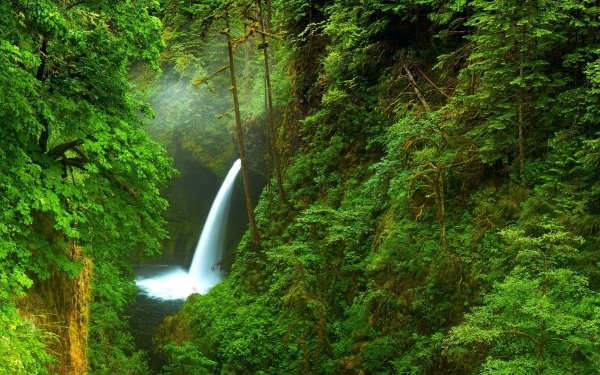 Earth Waterfall Waterfalls Forest Creek HD Wallpaper | Background Image