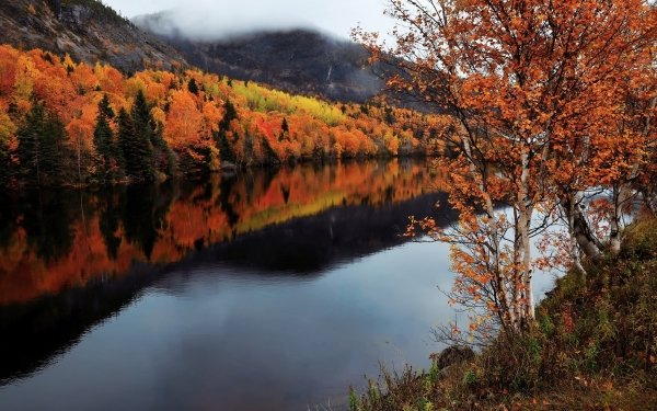 Earth Fall River Forest Canada Newfoundland HD Wallpaper   Background Image