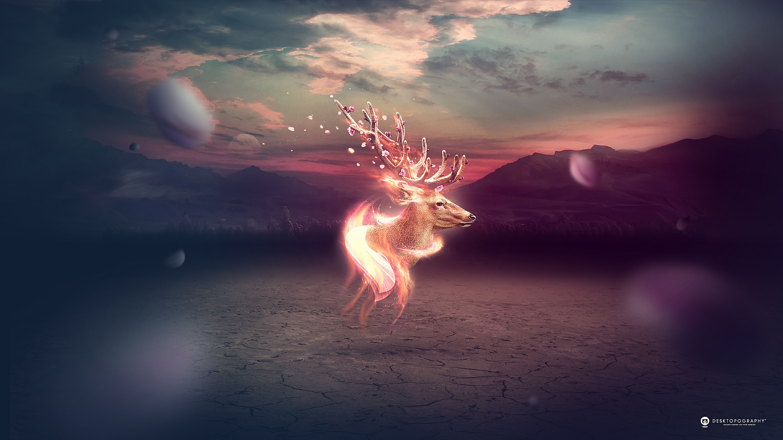 Deer hd wallpaper background image 2560x1440 id - Fantasy wallpaper pc ...