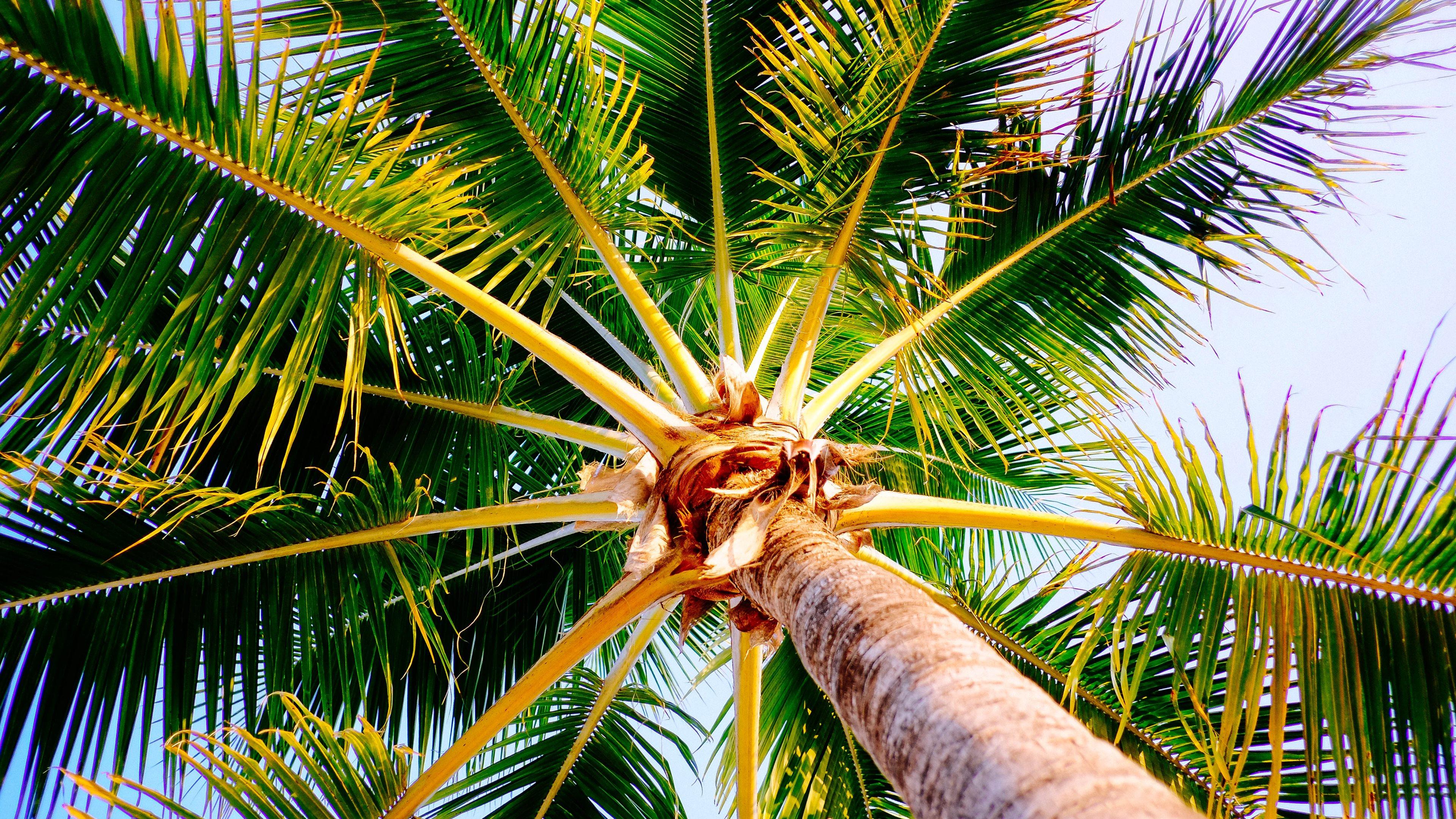 Palm Tree Beach 4k Hd Desktop Wallpaper For 4k Ultra Hd Tv: Palm Tree 4k Ultra HD Wallpaper