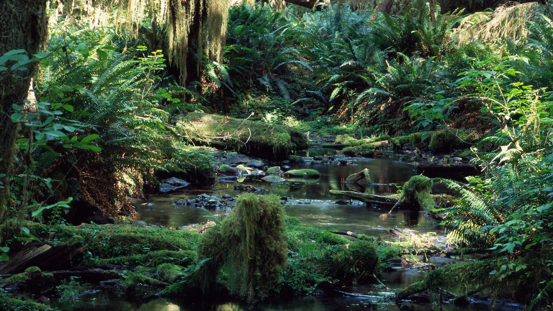 Tropical Rainforest HD Wallpaper