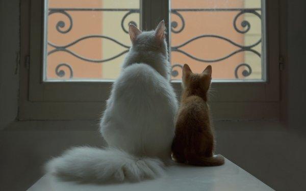 Animal Cat Cats Kitten Window Table HD Wallpaper | Background Image
