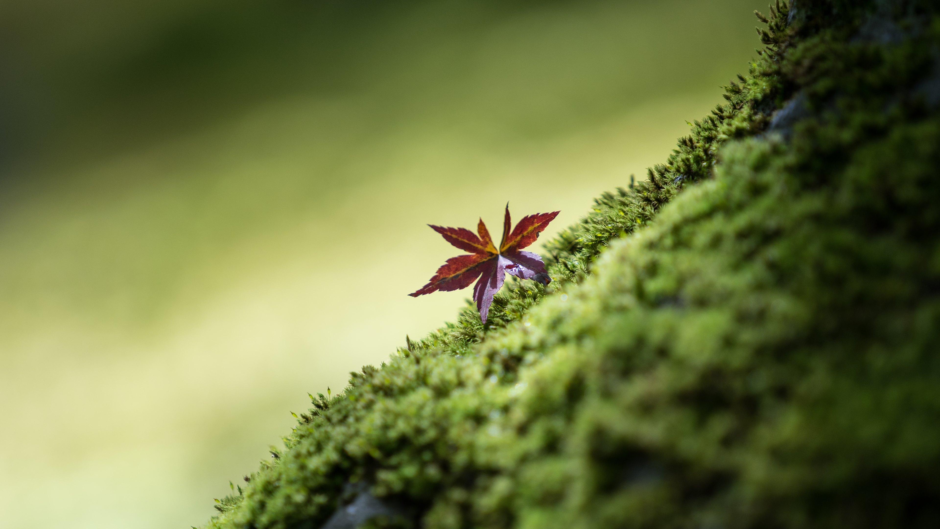 download Fortschritte der Botanik: Im Zusammenwirken mit den botanischen Gesellschaften von Danemark, Israel, den Niederlanden und der