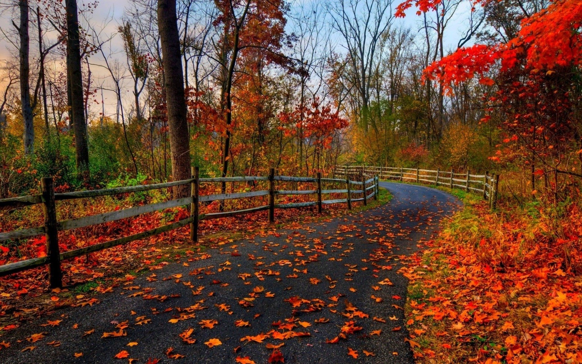 Fall full hd wallpaper and background image 1920x1200 for Sfondi autunno hd