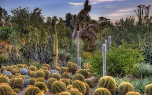 Earth Desert Cactus HD Wallpaper | Background Image