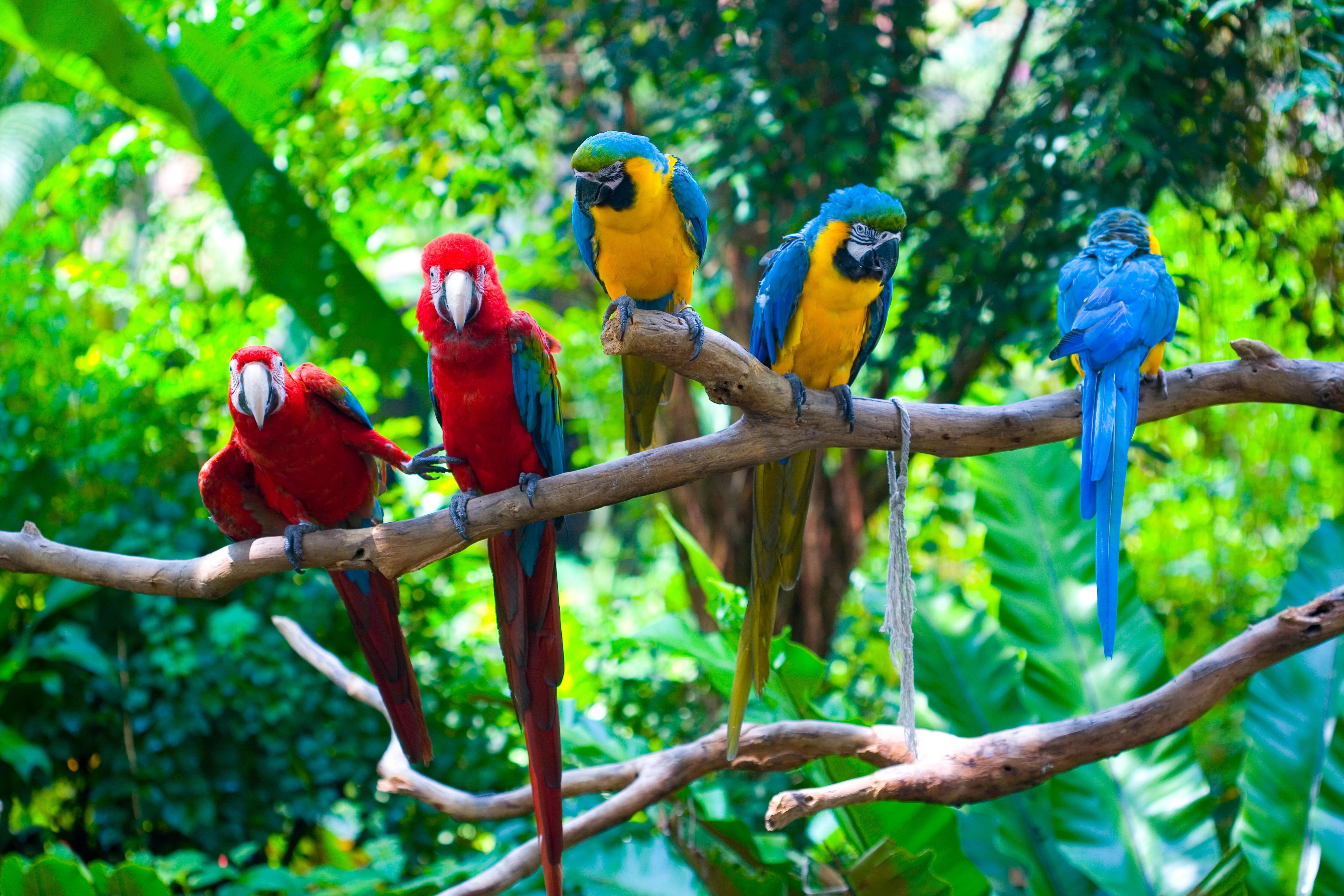 Ara Oiseau 5k Retina Ultra Fond D Ecran Hd Arriere Plan