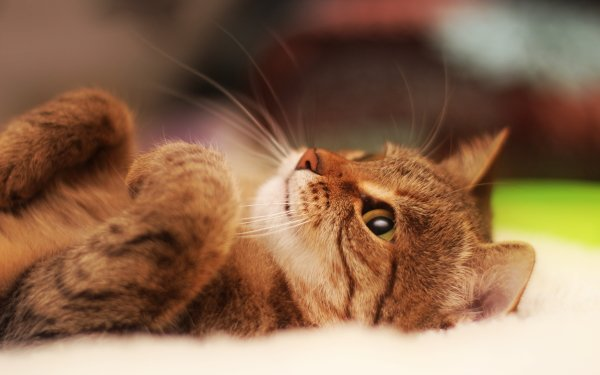 Animal Cat Cats Funny HD Wallpaper | Background Image