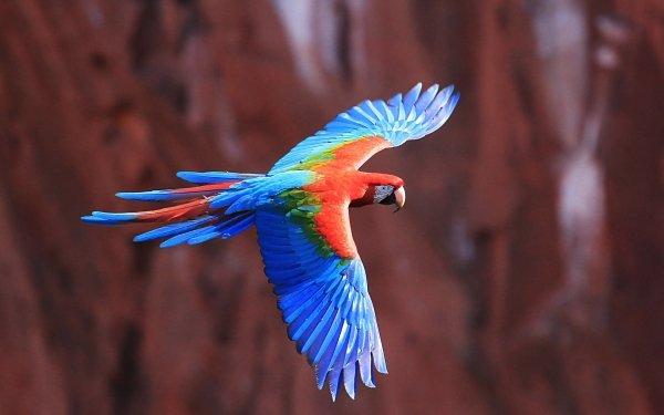 Animales Ara chloropterus Aves Loros Guacamayo Loro Flight Fondo de pantalla HD | Fondo de Escritorio