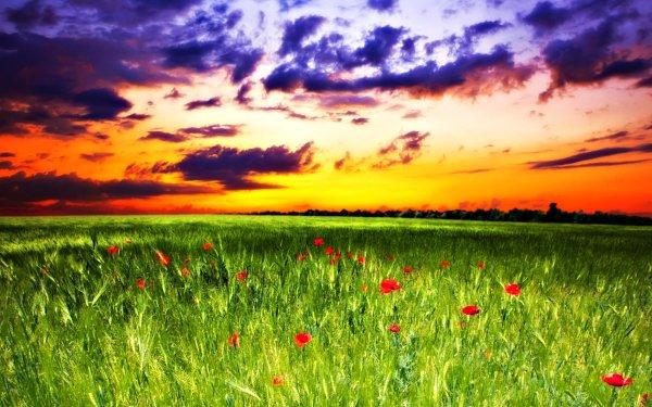 Earth Sunset Field Grass Artistic Poppy Cloud HD Wallpaper   Background Image