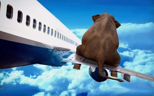 Humor Elephant HD Wallpaper | Background Image