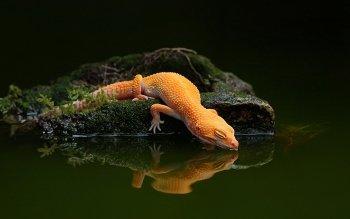 Animal Leopard Gecko 1080x1920 Mobile Wallpaper