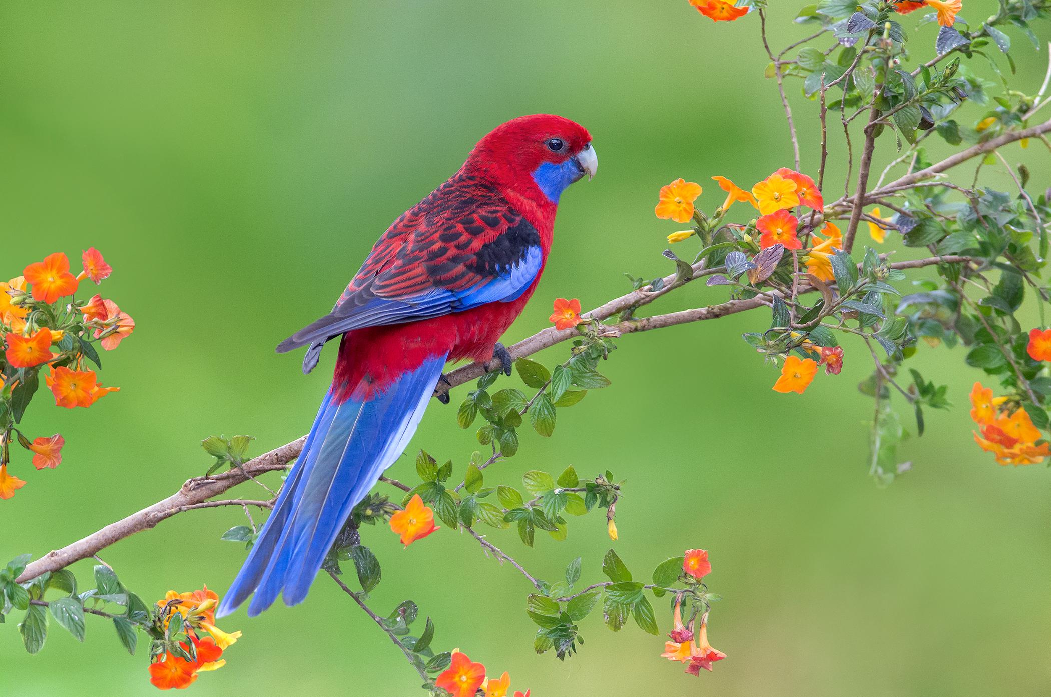 originele papegaai namen