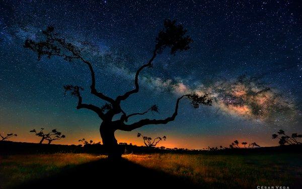 Tierra/Naturaleza Árbol Arboles Vía Láctea Noche Glow Paisaje Fondo de pantalla HD | Fondo de Escritorio