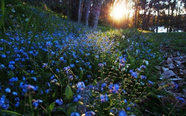 Earth Flower Flowers Nature Blue Flower Sunbeam HD Wallpaper | Background Image