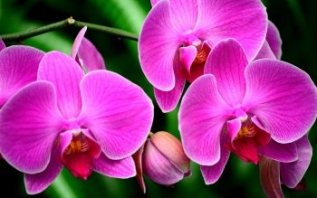 240 orchid hd wallpapers background images wallpaper abyss hd wallpaper background image id599290 mightylinksfo