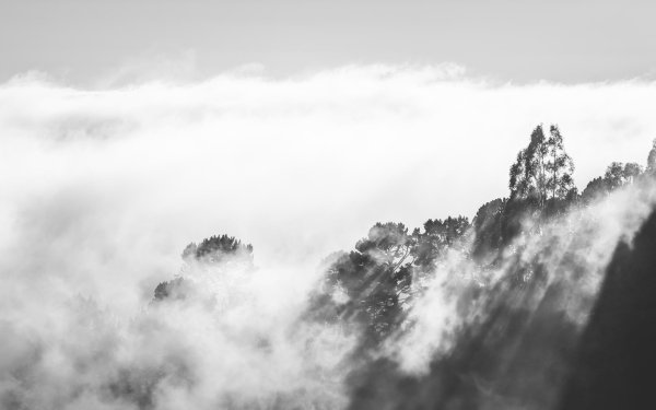 Earth Fog Nature Cloud Tree Landscape Black & White HD Wallpaper | Background Image
