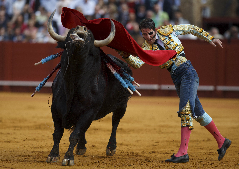 bull fighting 1920x1080 hd - photo #6