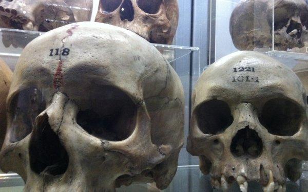 Dark Skull Museum HD Wallpaper | Background Image