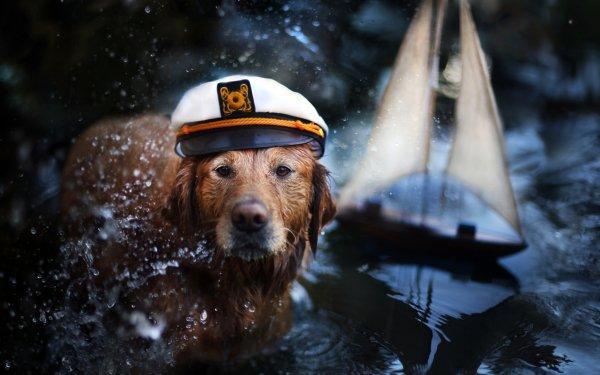 Animal Golden Retriever Dogs HD Wallpaper   Background Image