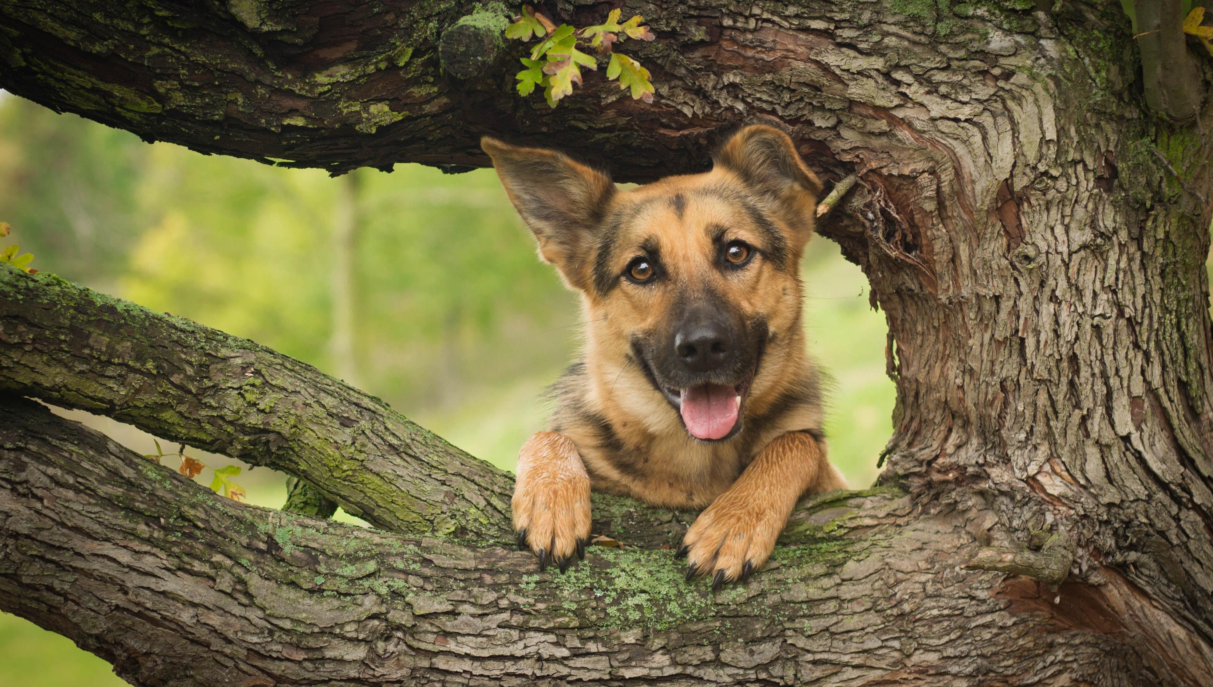 Alpha Coders Wallpaper Abyss Erkunden Sie die Sammlung Hunde Tiere ... Golden Retriever And Baby