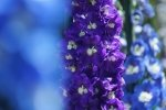 Purple Flower HD Wallpapers | Background Images