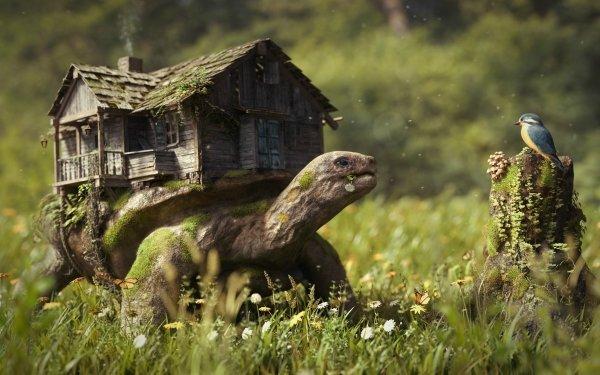 Fantaisie Turtle Animaux Fantastique Fond d'écran HD   Image
