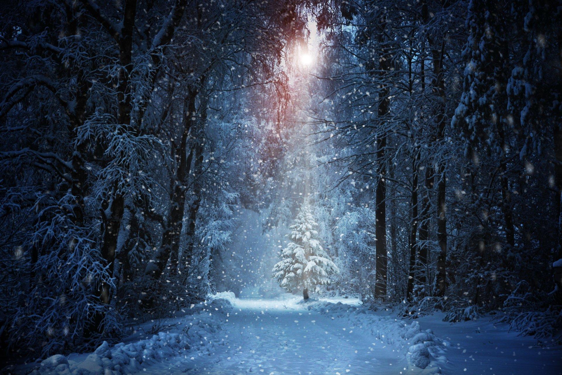 Earth - Winter  Forest Snow Snowfall Sunbeam Path Wallpaper
